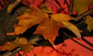 Fall Leaf2