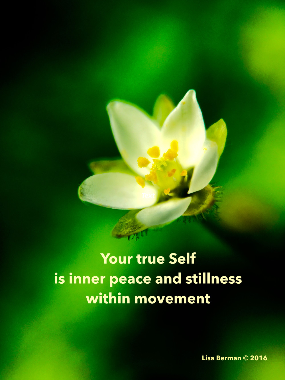 Your true Self is inner peace and stillness within movement