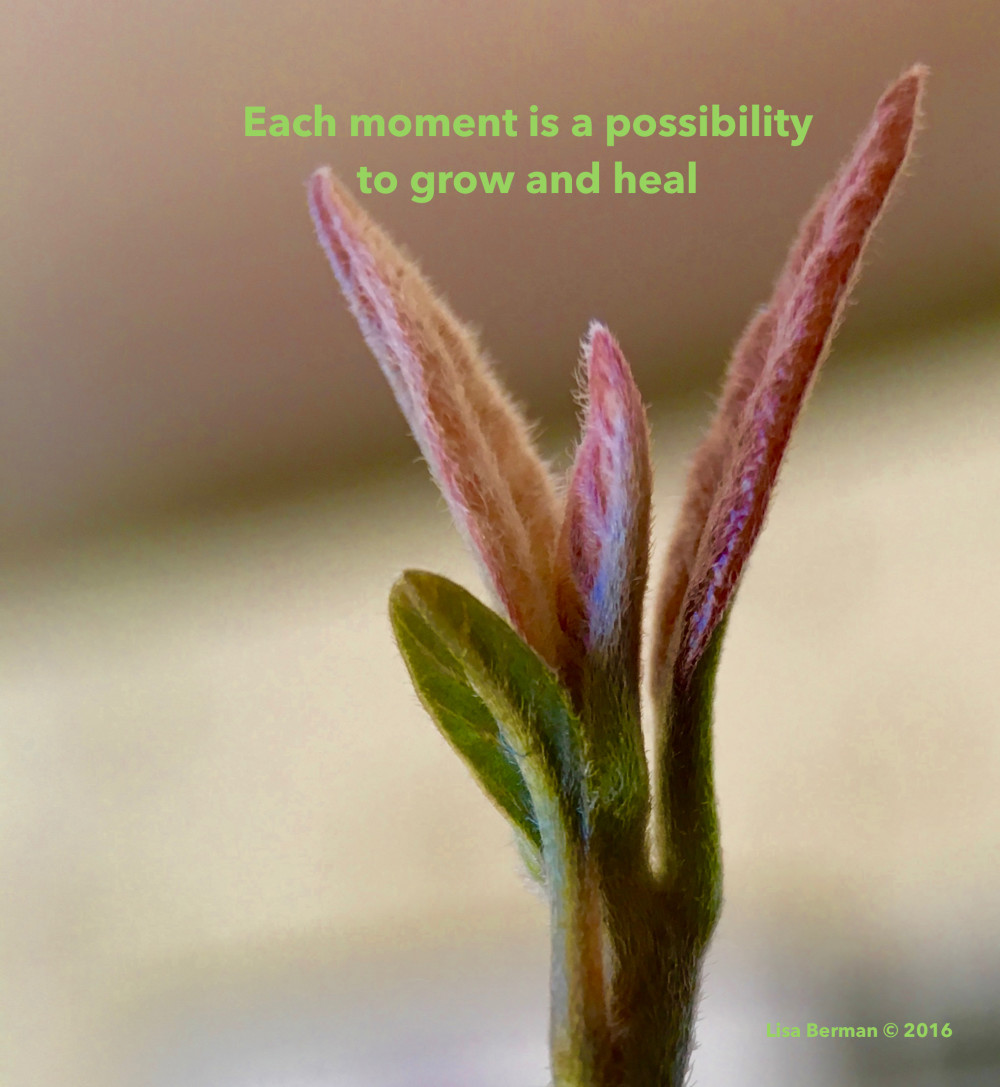Each moment is a possibility to grow and heal